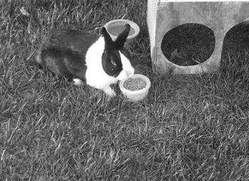 2010 Bunny
